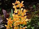 Botanic Gardens Singapore - National Orchid Garden