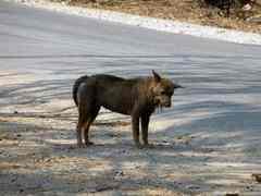 มูลนิธิศูนย์รักษ์สุนัขหัวหิน